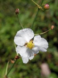 FlowerbytheLake