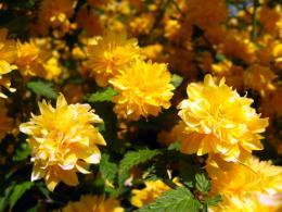 yellowandgreen