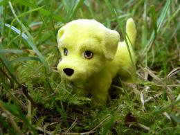 yellow doggy :)