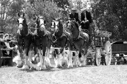 Six Horse Power