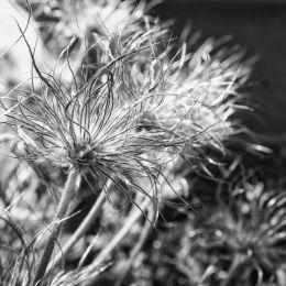 Furryflower