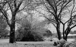 backyardsnow