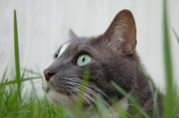 CatintheGrass