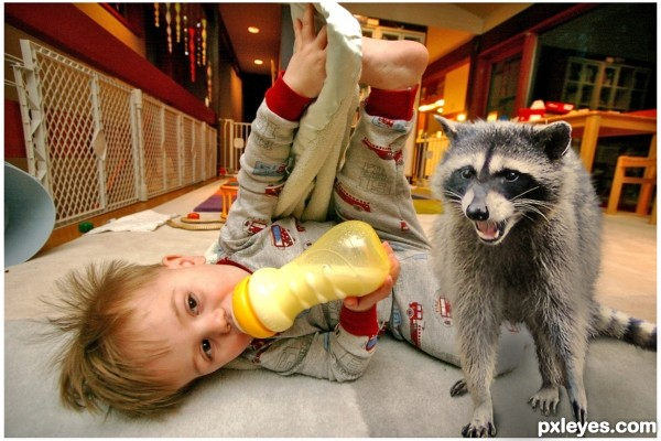 Attack Coon
