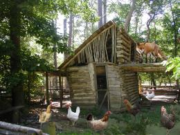 Fox guarding the hen house