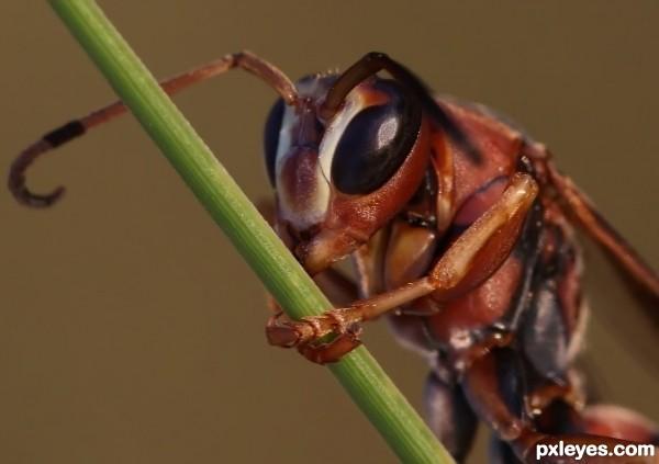 Bush attracting wasps