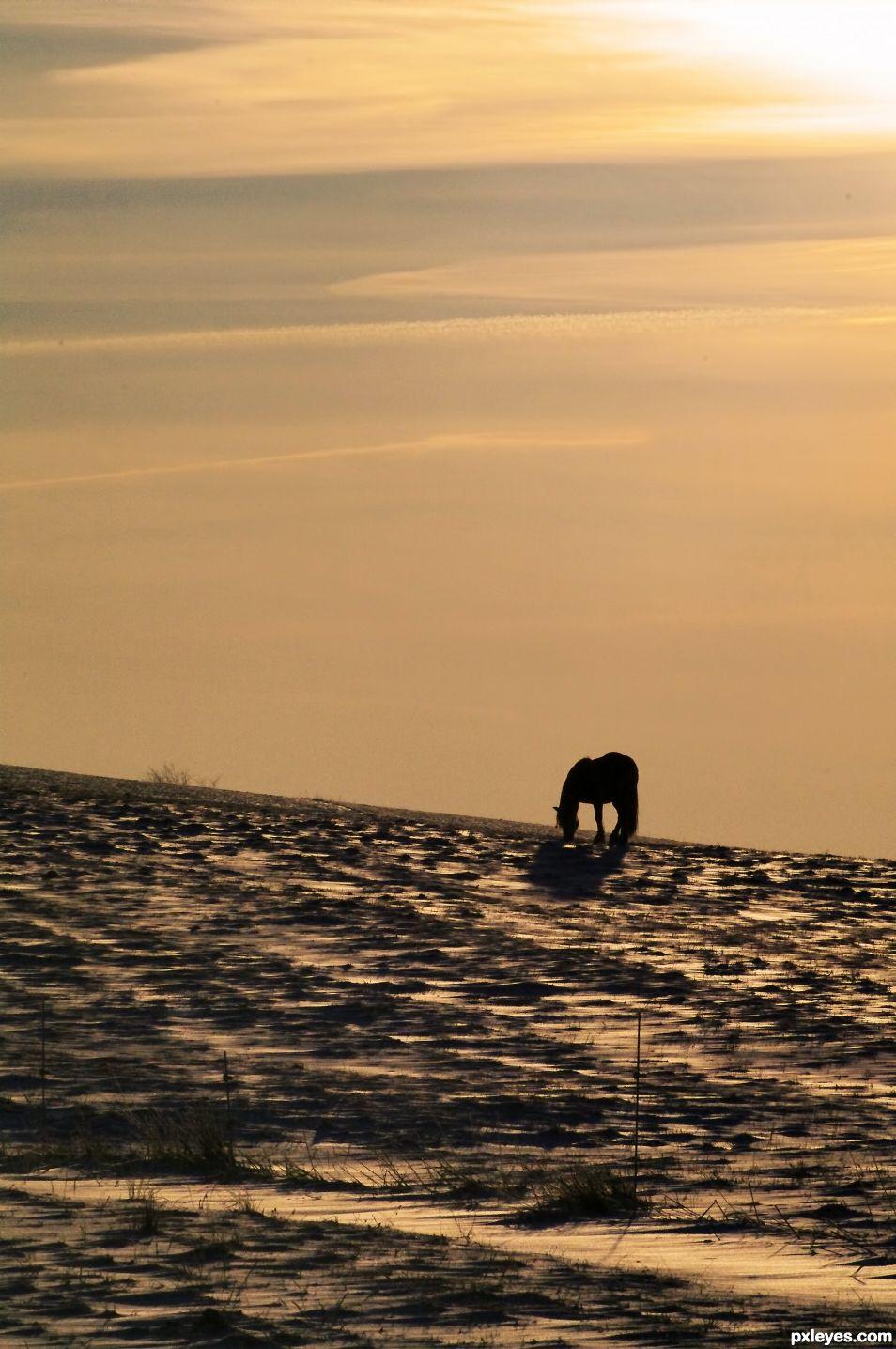 Horse on the Horizon