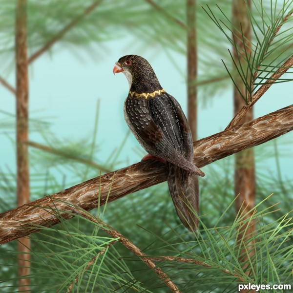 Golden Ringed Forest Falcon