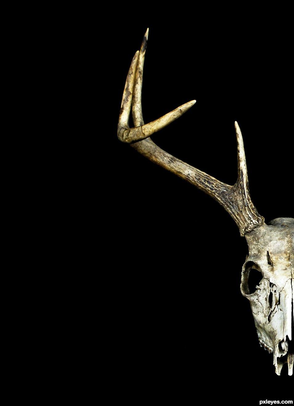 Half a Buck