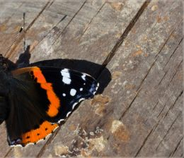 Half a butterfly casts more than a half-shadow (proverb)