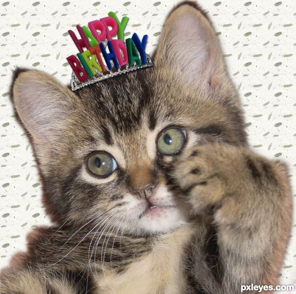 birthday kitten