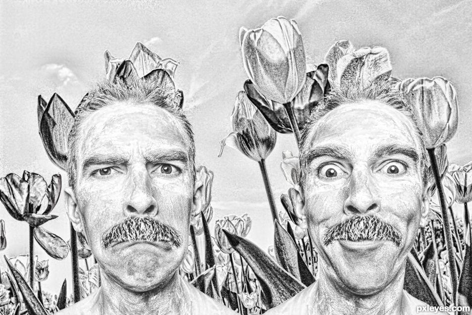 Tulips of Groucho