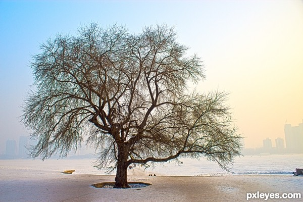 Harbin Tree