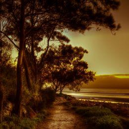 Sunrise, Moreton Bay, Australia Picture