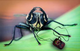 Flies like music too