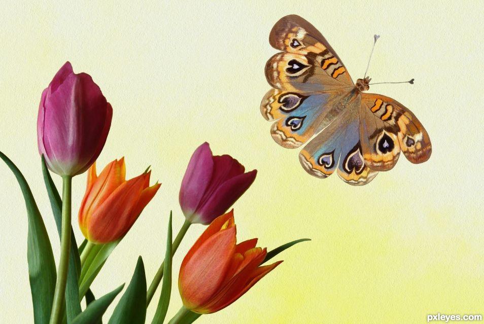 Hearterfly