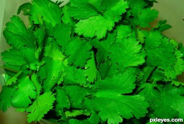 My fav - coriander