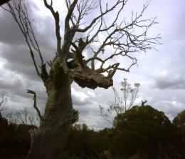 Dragonheadtree