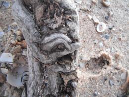 Driftwoodprofile