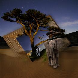Hidden Safari