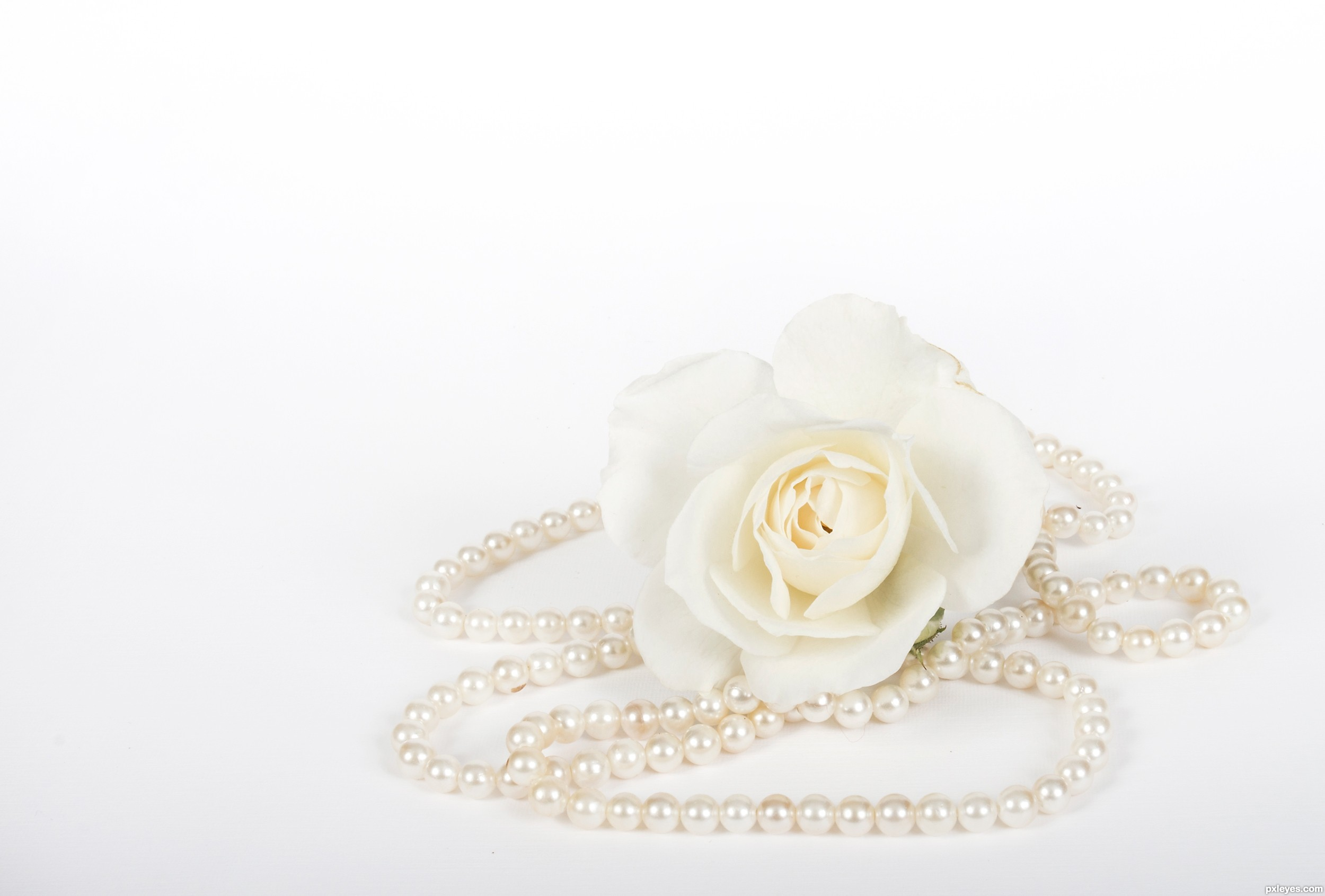 roses and pearls - photo #6