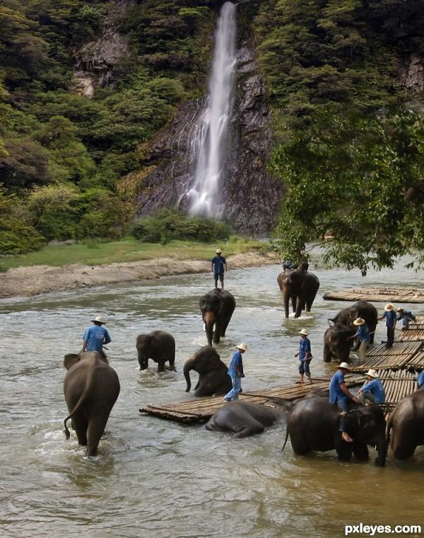 Elephants Day Off