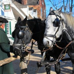 CarriageHorses