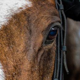 Alovelyhorse
