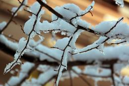 Frozenbranches
