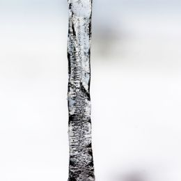 Icicle Picture