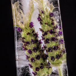 LavenderIceBlock