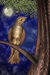 Theunknownbird