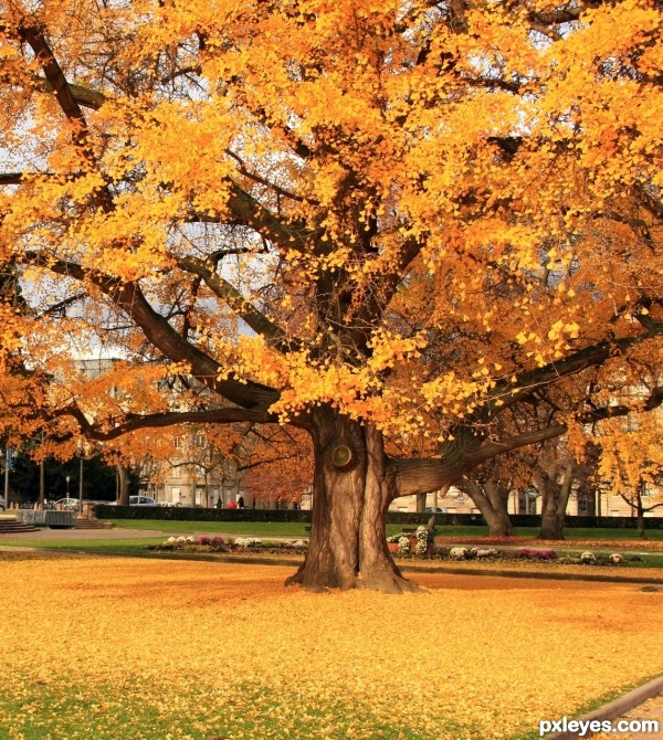 Branching Yellow Tree