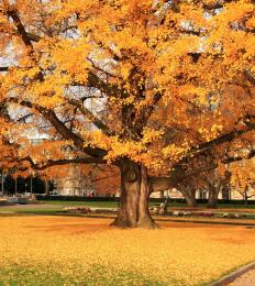 Branching Yellow Tree