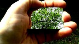treesinbackyard