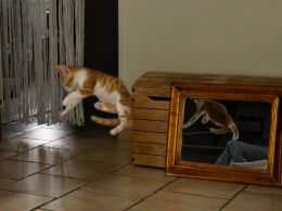 Flying Cat