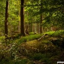 in the forest 2 photography contest