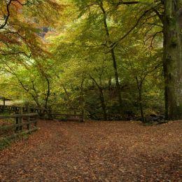 Glenarrif Woods Co Antrim Ireland Picture