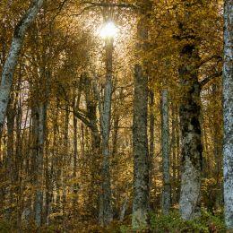 OctoberForest