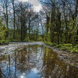 Forestinfrontofyouandinthereflectionofthewater