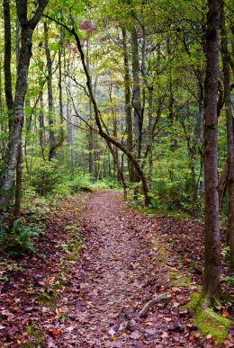 Forgotten trail