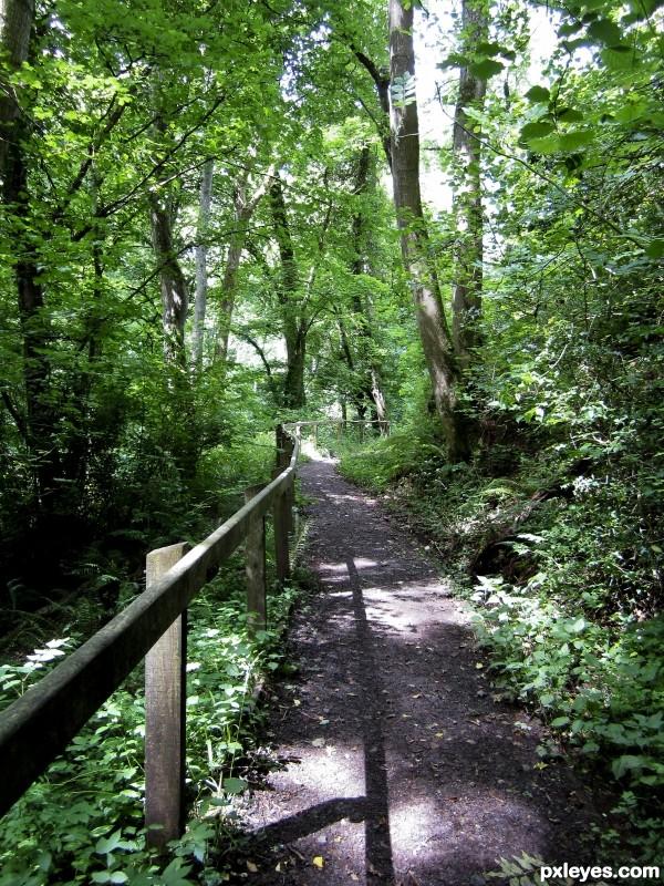 Talgarth Woods