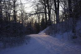 Fuglsang forest winter