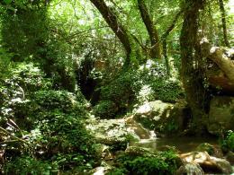 Iamlostinaforest