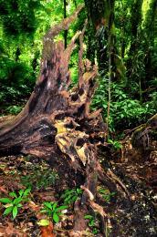 Naturepower