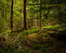 Serene Picture