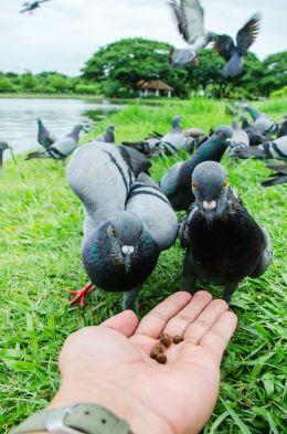 In hand bird feeder