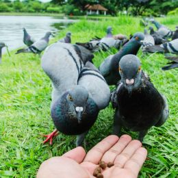 Inhandbirdfeeder