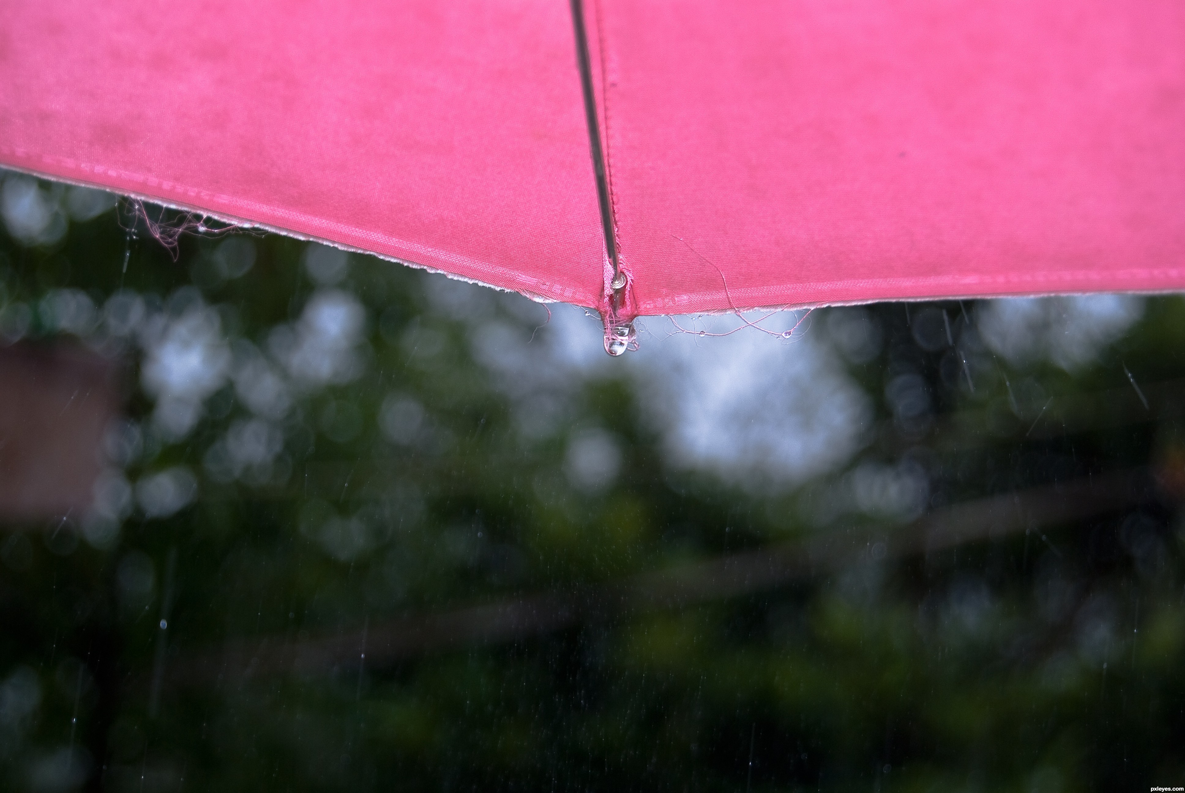 bf7b12553c8f9 pink umbrella picture, by roon for: in the rain photography contest ...
