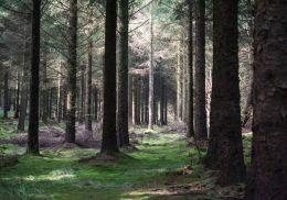 Woods magic